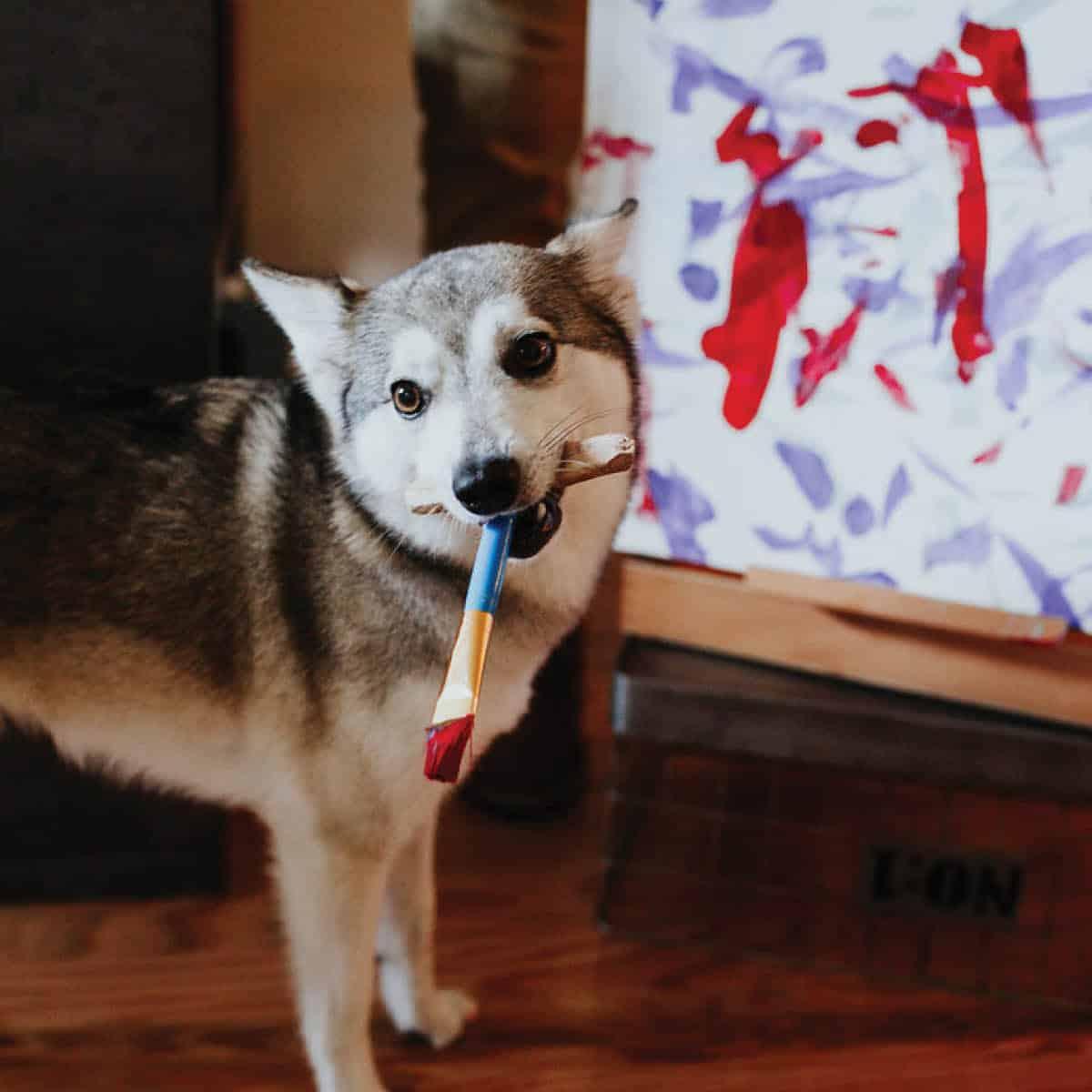 Sudo the dog paints a masterpiece
